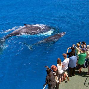 whale tours samana